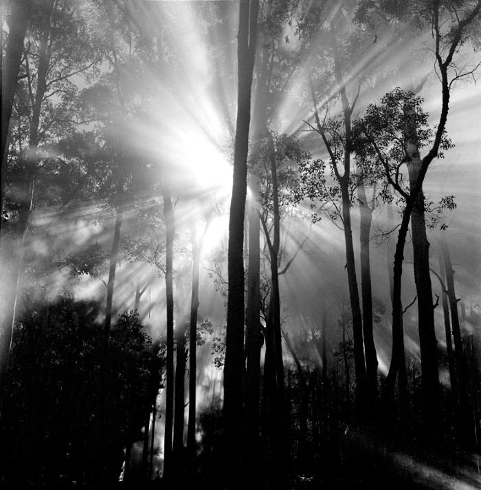 Blue gum forest sun burst