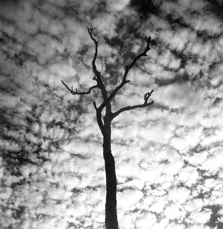 tree silhoette