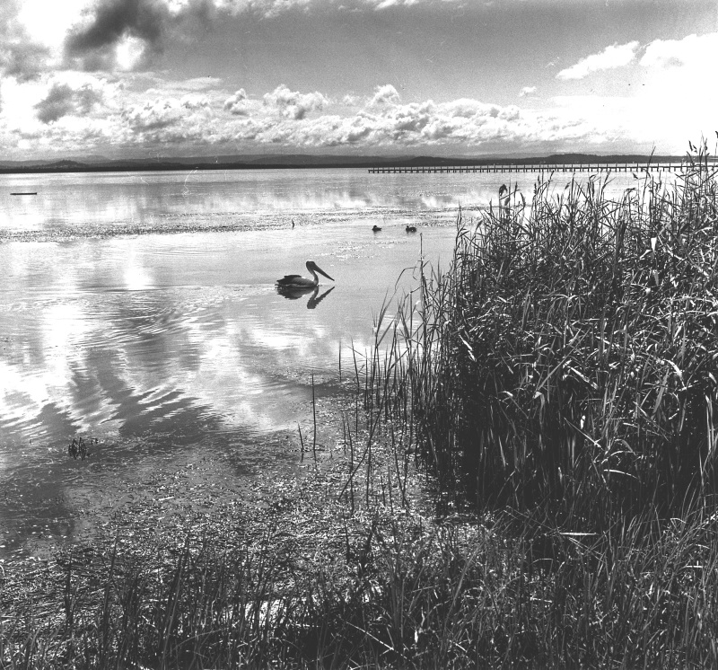 Reflections, Long Jetty 1950s