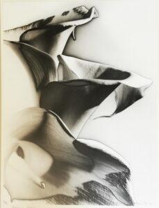 Arum lilies (solarised) 1937